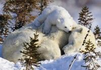 сказка про то,как медвежонок счастье искал